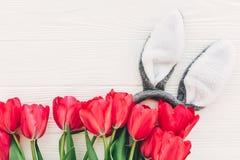 pojęcie Easter szczęśliwy królików ucho i eleganccy różowi tulipany na whit Zdjęcia Royalty Free