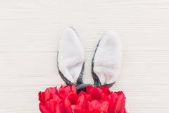 pojęcie Easter szczęśliwy królików ucho i eleganccy różowi tulipany na whit Obrazy Royalty Free