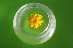 Pojęcie ekologia żółty kwiat calendula wewnątrz i woda zdjęcia royalty free