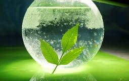 Pojęcie ekologia gałąź zieleni woda w a i liście zdjęcie royalty free