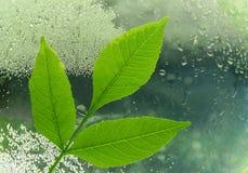 Pojęcie ekologia gałąź zieleni woda w a i liście zdjęcie stock