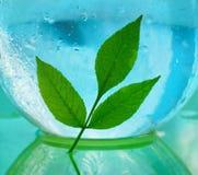Pojęcie ekologia gałąź zieleni woda w a i liście zdjęcia stock