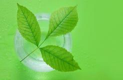 Pojęcie ekologia zieleń liście rozgałęziają się i nawadniają w spher obrazy stock