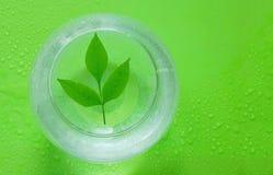 Pojęcie ekologia zieleń liście rozgałęziają się i nawadniają w spher zdjęcie royalty free
