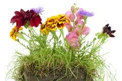 pojęcie kwiaty mieścą nasz planetę Fotografia Royalty Free