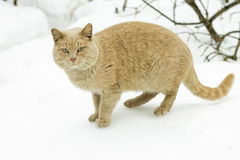 Pojęcie marsz - kot kotelni sezon zdjęcie stock