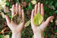 Pojęcie natury ochrona, środowisko, ekologia, eco obrazy royalty free