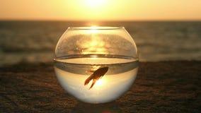 Pojęcie natury ochrony trochę ryba pławik w round fishbowl morzem przy zmierzchem zbiory