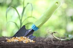 Pojęcie obsiewanie, kukurudz ziarna i ogrodowy narzędzie na ziemi, Obrazy Royalty Free
