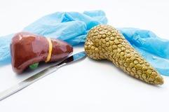 Pojęcie operacja odtwórcza, dieta i odżywianie hepatobiliary, Skalpel i medyczne rękawiczki blisko modelów wątróbki i trzustki Su Zdjęcia Royalty Free