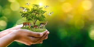 Pojęcie rezerwat przyrody chroni przyrody Globalnego nagrzania bochenka rezerwowej tygrysiej Jeleniej Karmowej ekologii Ludzkie r obrazy stock