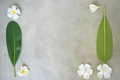 Pojęcie skład zdroju traktowanie, zamyka up biały plumeria lub frangipani kwitnie na kamiennym tle z kopii przestrzenią obrazy royalty free