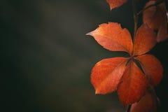 Pojęcie wizerunek dla sezonu jesiennego obrazy royalty free
