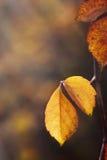 Pojęcie wizerunek dla sezonu jesiennego zdjęcia royalty free