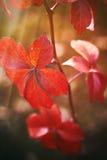 Pojęcie wizerunek dla sezonu jesiennego zdjęcie stock