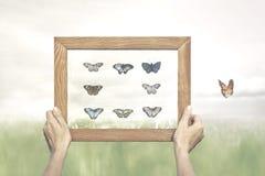 Pojęcie wolność motyl ucieka od obrazu jego poborca zdjęcia royalty free