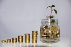 Pojęcie wzrastający savings na białym tle fotografia stock