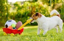 Pojęcie zabawy lata aktywność z psem i dużo bawimy się piłki obraz stock