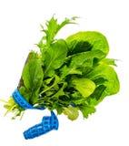 Pojęcie zdrowy styl życia, sprawność fizyczna i żywienioniowy jedzenie, obraz stock