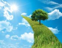pojęcie zieleń Zdjęcie Stock
