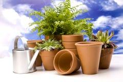 pojęcia ogrodnictwa odosobniony biel Zdjęcie Stock