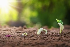pojęcia rolnictwa flancowania obsiewanie r kroka w ogródzie z Obrazy Royalty Free