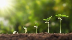 pojęcia rolnictwa flancowania obsiewanie r kroka w ogródzie z Zdjęcia Stock