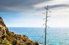 Pojedyncza agawa kwiatu roślina jako odległa łódź żegluje na Mediterrenean morzu Zdjęcie Stock