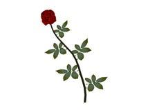 Pojedyncza czerwień wzrastał Obraz Royalty Free
