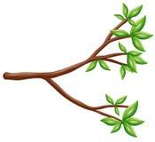 Pojedyncza gałąź z zielonymi liśćmi ilustracja wektor