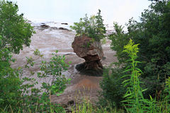 Pojedyncza Hopewell skała podczas niskiego przypływu Obraz Stock