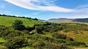 Pojedyncza Irlandzka droga pod zielenią zdjęcie stock