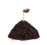 Zielona roślina w kopu ziemia Zdjęcia Stock