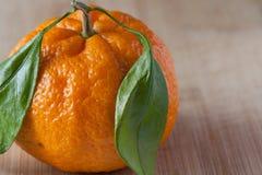 Pojedyncza mandarynka na drewnianym wypuscie, zamyka up obraz royalty free