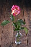 Pojedyncza menchii róża w szklanej wazie zdjęcie royalty free