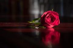 Pojedyncza róża odpoczywa na ciemniącym barze Obrazy Royalty Free
