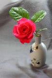 Pojedyncza rewolucjonistki róża Zdjęcia Stock