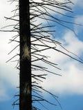 pojedyncze drzewo Zdjęcia Stock
