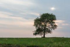 pojedyncze drzewo Obrazy Stock