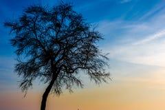 pojedyncze drzewo Obrazy Royalty Free