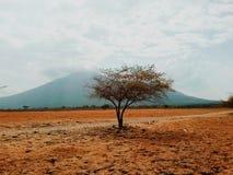 pojedyncze drzewo obraz stock