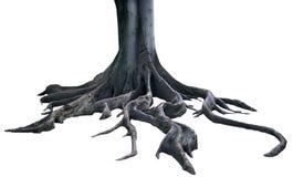 pojedyncze korzenie Zdjęcie Royalty Free