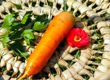 pojedyncze warzywa Obrazy Royalty Free
