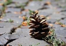 Pojedynczego brązu suchy rożek kłaść na podłoga ulica Zdjęcia Royalty Free