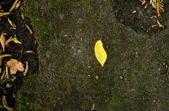 Pojedynczego liścia samotny tło Zdjęcia Stock