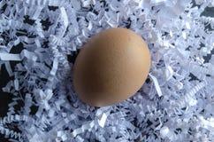 Pojedynczego Organicznie Brown kurczaka Jajeczny Etyczny Uprawiać ziemię fotografia royalty free