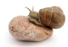 pojedynczy ślimaka kamień Fotografia Royalty Free