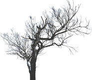 pojedynczy 17 drzewny wektora Obraz Stock