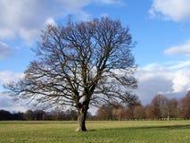 pojedynczy 5 drzewo Obrazy Royalty Free