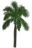 Pojedynczy ampuły zieleni drzewko palmowe na bielu ilustracji